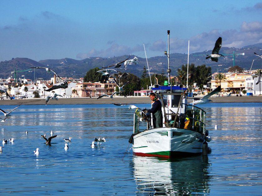 Boat-trips-tours-costa-del-sol-axarquia-torre-del-mar-.nerja-maro-costaboattrips-com-2