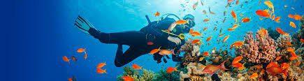 boat-trips-malaga-nerja-scuba-cerro-gordo-marine-reserve