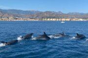 Dolphins Boat Trip Nerja Maro Waterfall