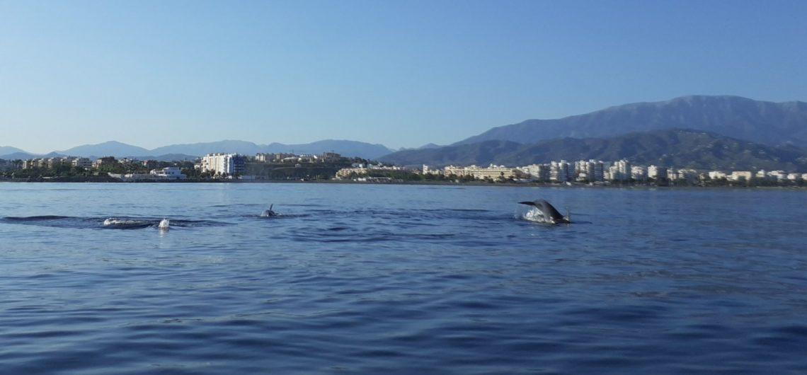 dolphins torre del mar nerja boat trips costa del sol